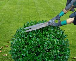 J&D Fencing & Gardening - Sint-Lievens-Houtem - Snoeien & vellen bomen